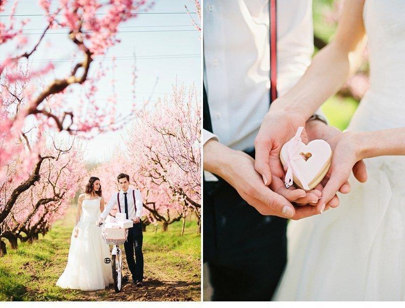 blooming peach tree shoot 0011