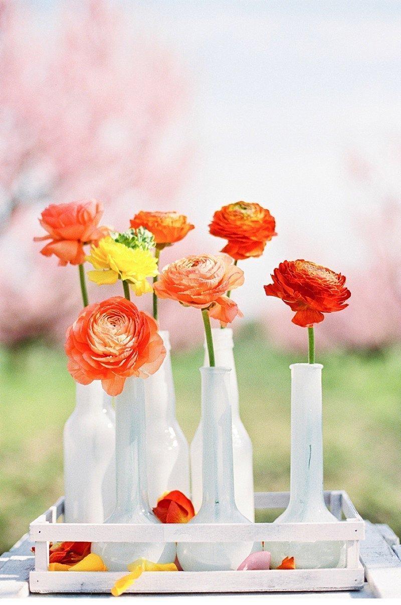 blooming peach tree shoot 0014