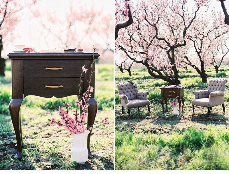blooming peach tree shoot 0033