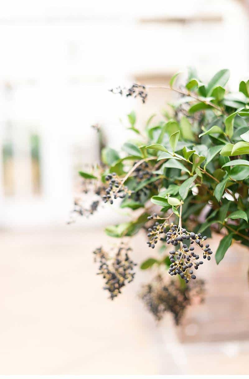botanicals berries blumenshoot 0054